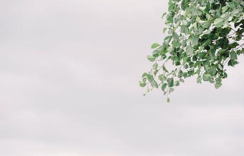 Безкоштовне стокове фото на тему «відділення, дерево, зростання, колір»
