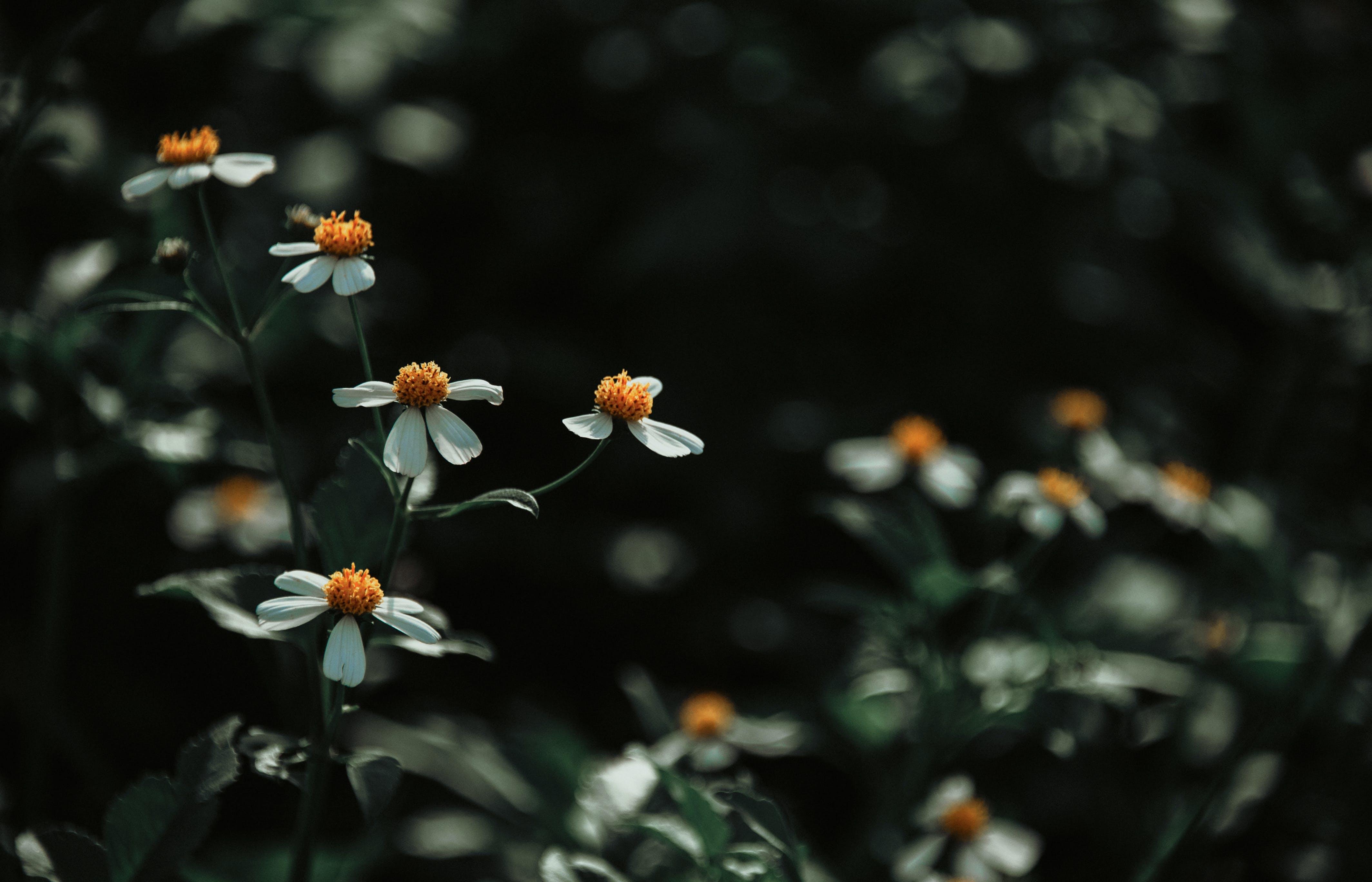 Fotobanka sbezplatnými fotkami na tému farba, flóra, kvet ovocného stromu, kvety