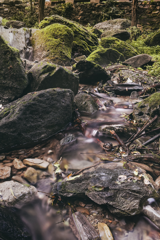 Fotos de stock gratuitas de agua, bosque, cámara rápida, caudal
