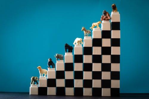 คลังภาพถ่ายฟรี ของ กอริลลา, กั้น, ของเล่น, ขาว