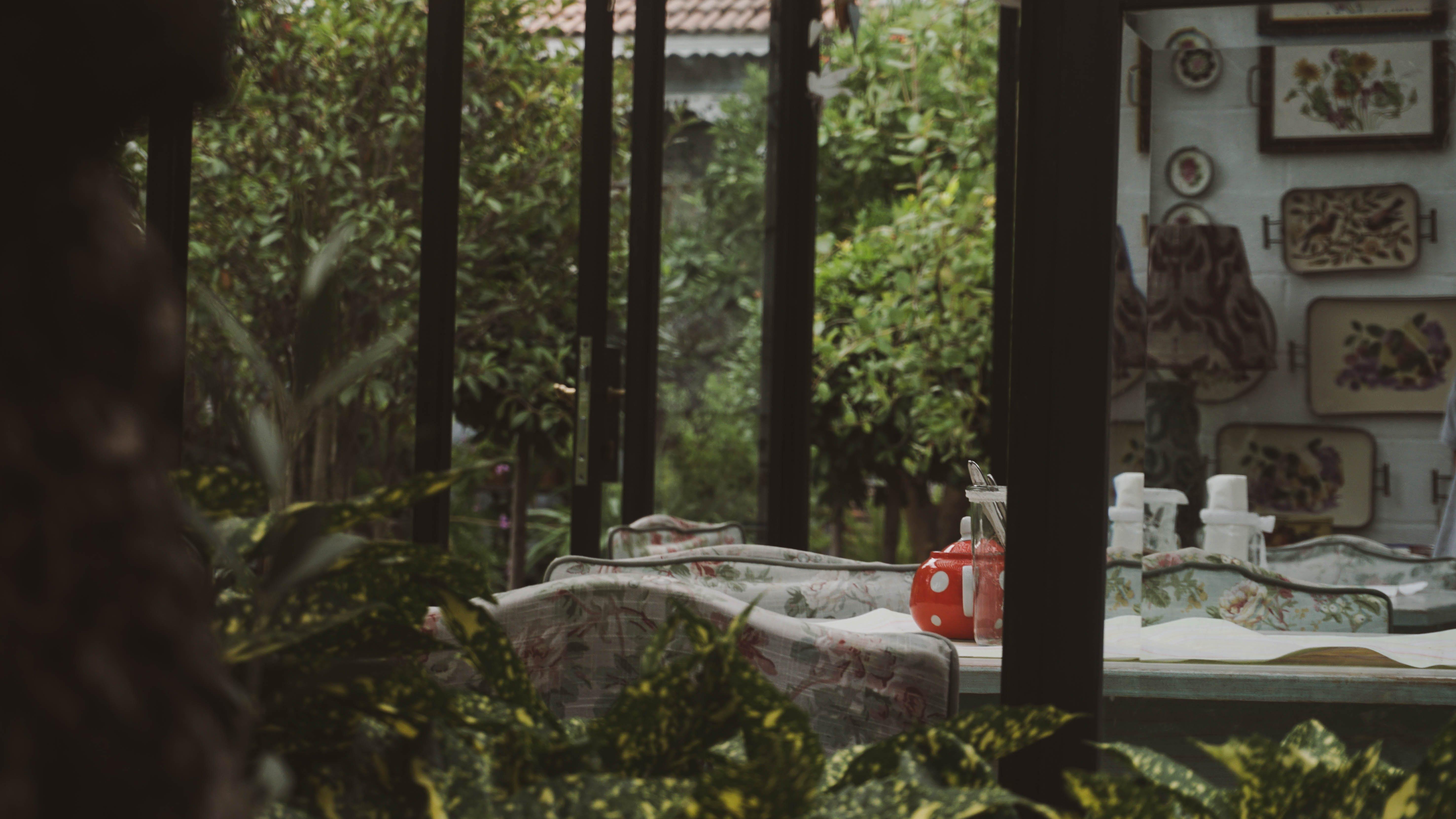 Free stock photo of cinematic, nature, tea
