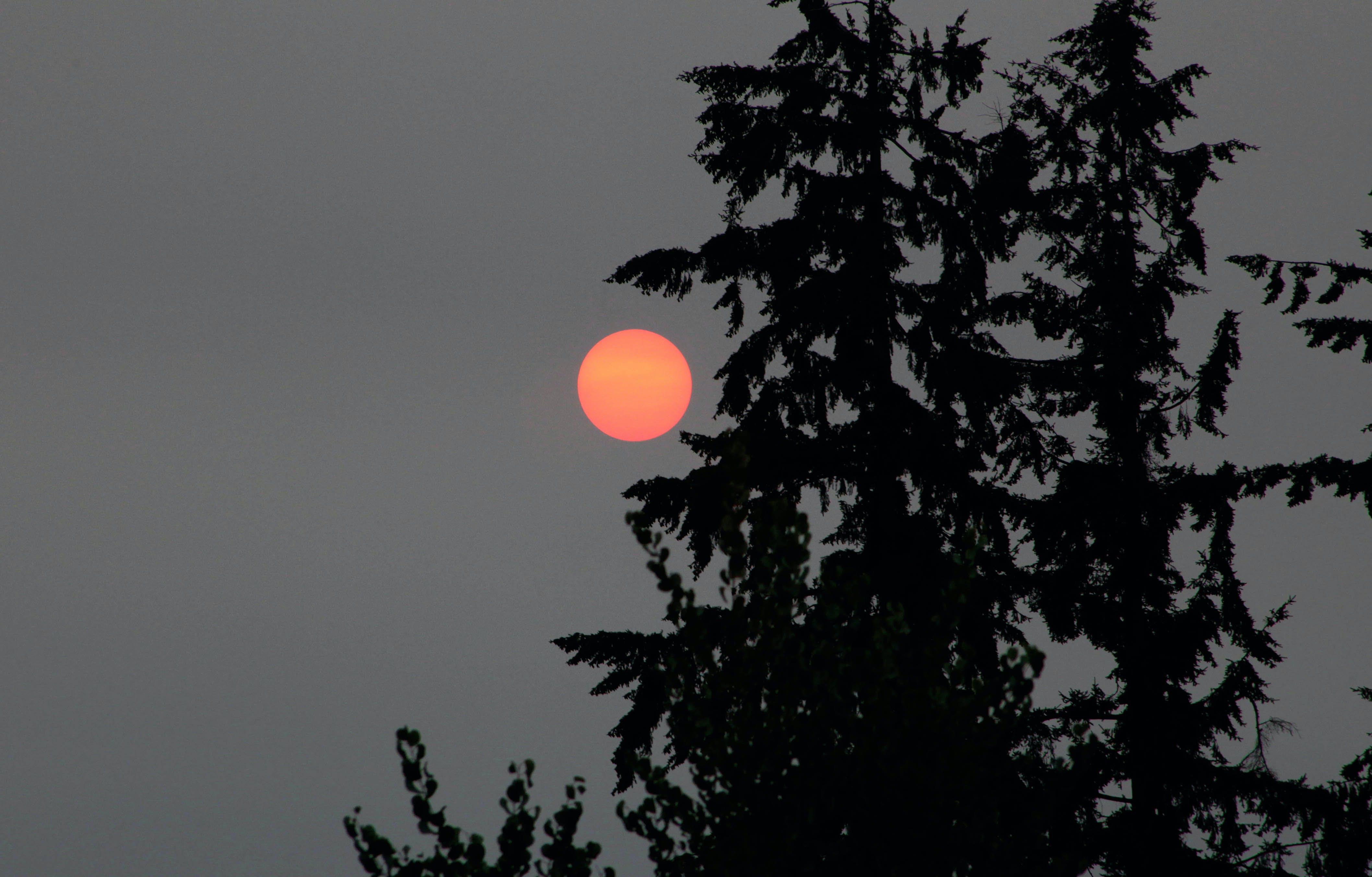 Gratis stockfoto met avond, bomen, gouden zon, milieu