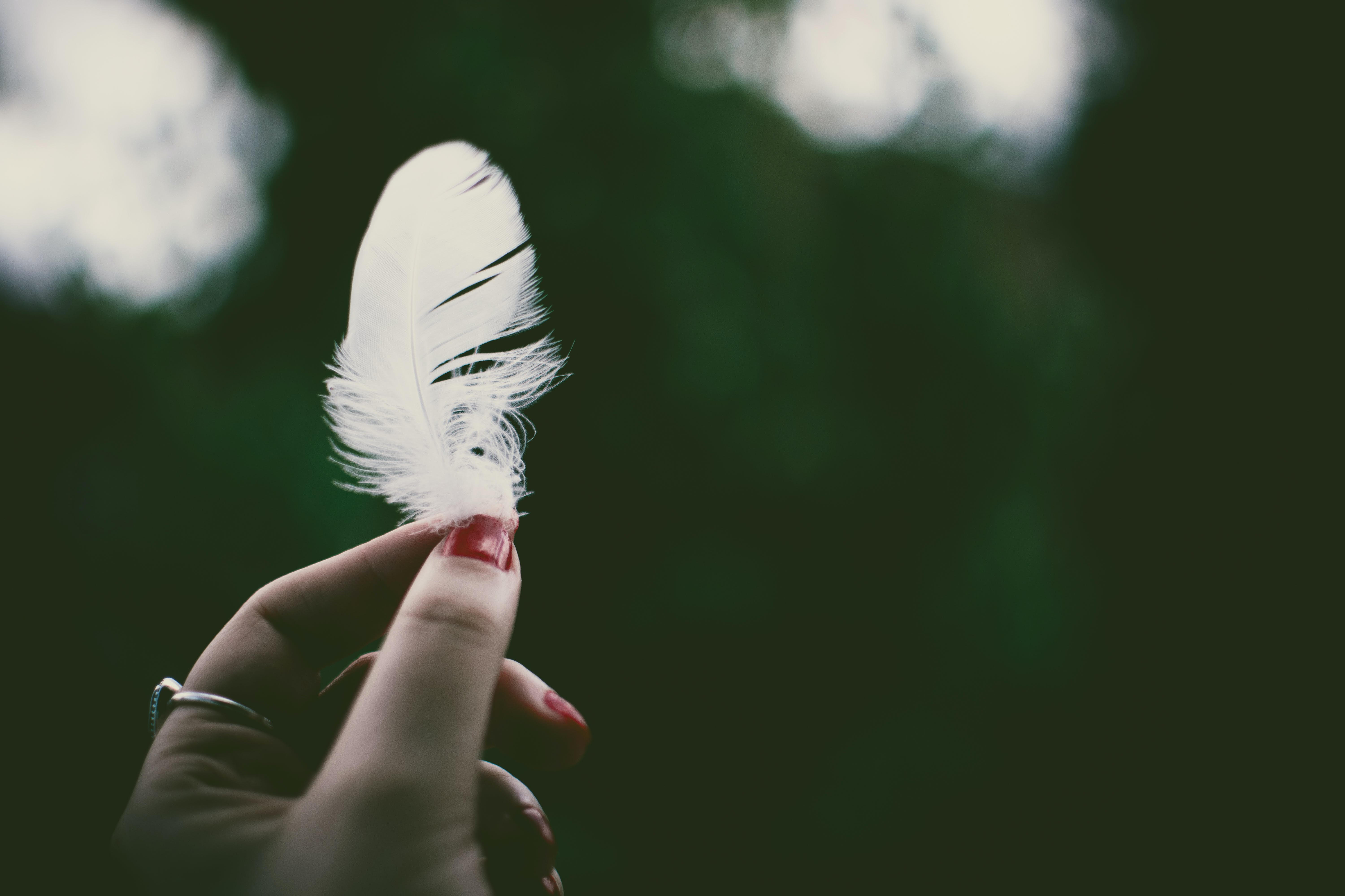 Person Holding White Feather in Selective Focus Photography