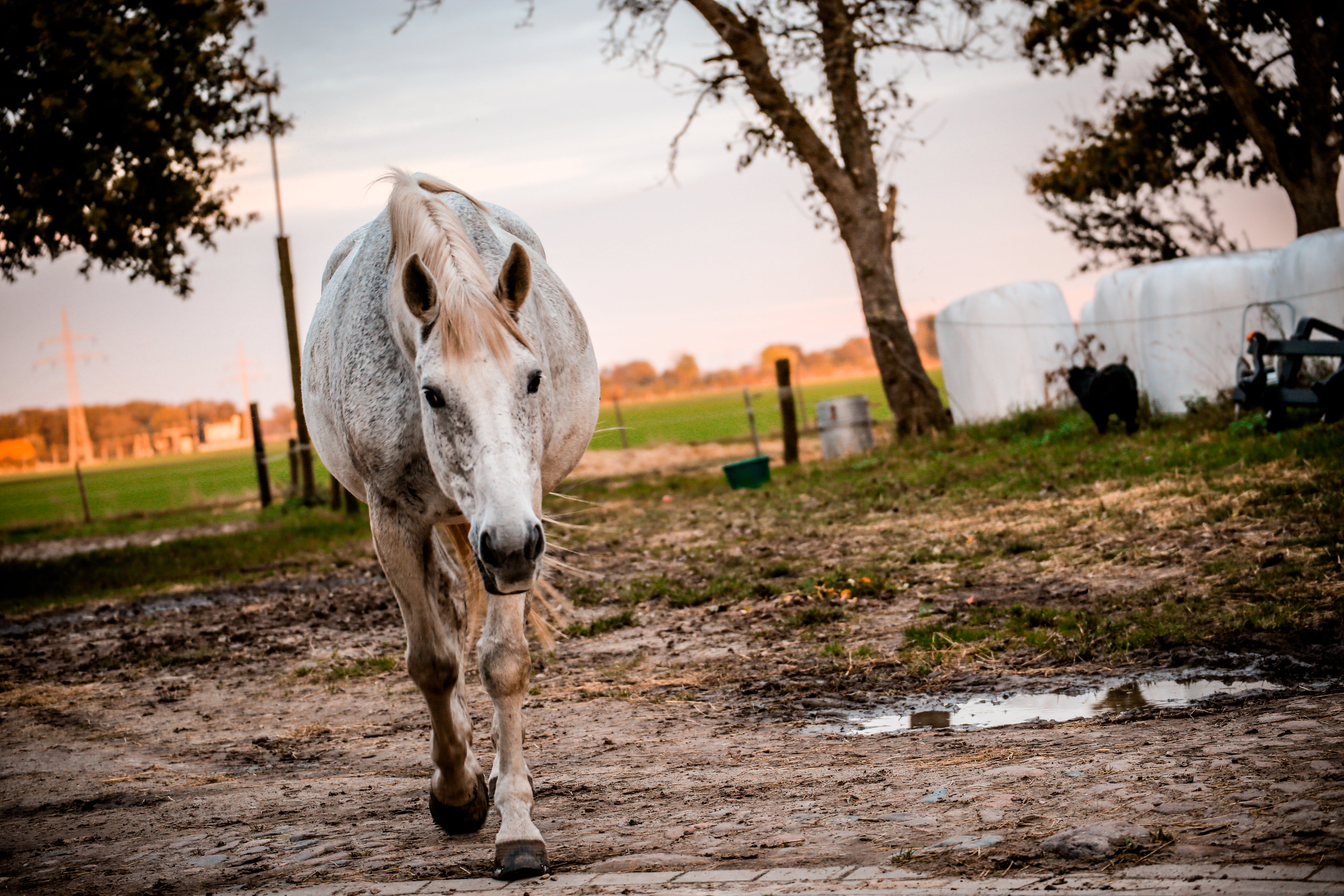 White and Brown Horse on Brown Mud