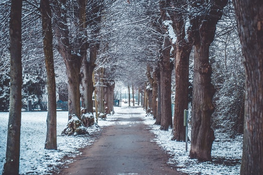 Free stock photo of snow, trees, winter, avenue