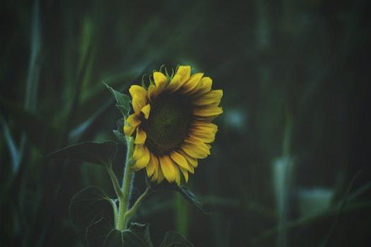 Free stock photo of nature, night, garden, yellow
