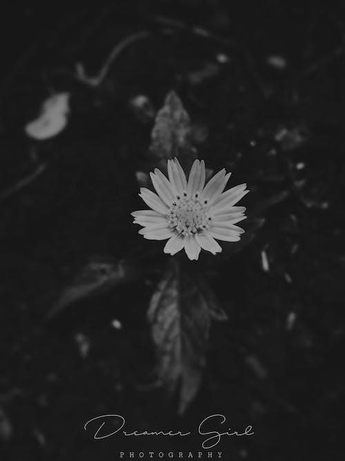 スナップ, 写真撮影, 愛, 白黒の無料の写真素材