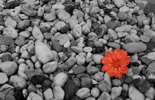 Ingyenes stockfotó kontraszt, szín, virág témában