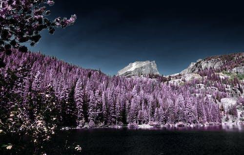 Ingyenes stockfotó colorado, fák, hegyek témában