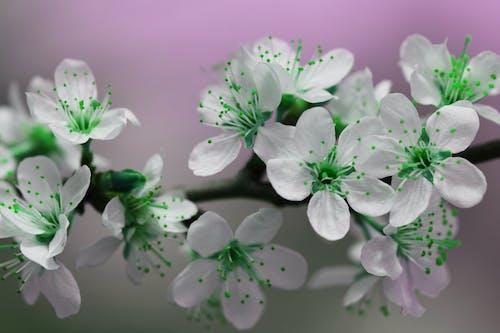 Gratis stockfoto met bloem, bloemblaadjes, bloemen, bloesem