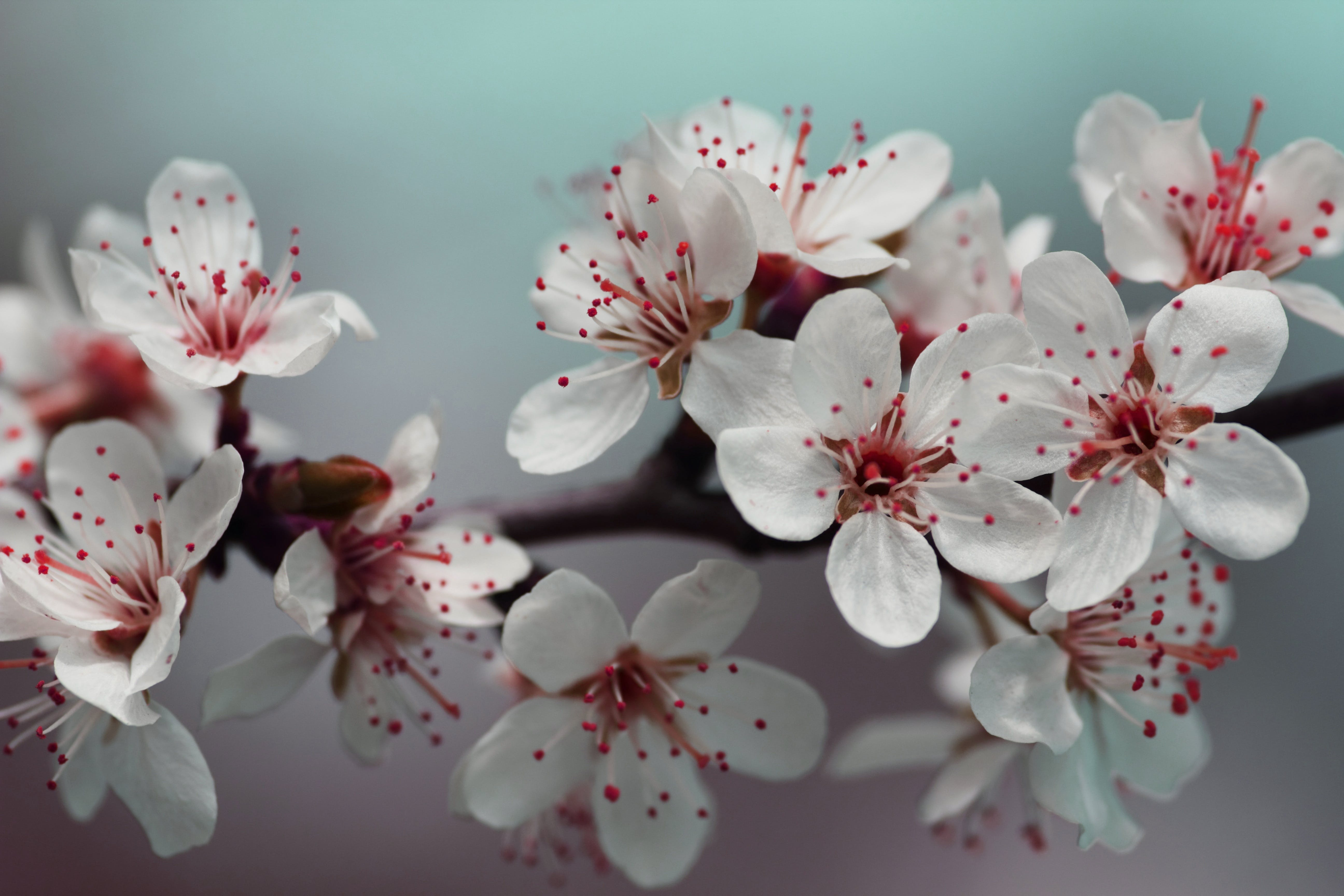ast, bäume, blühen