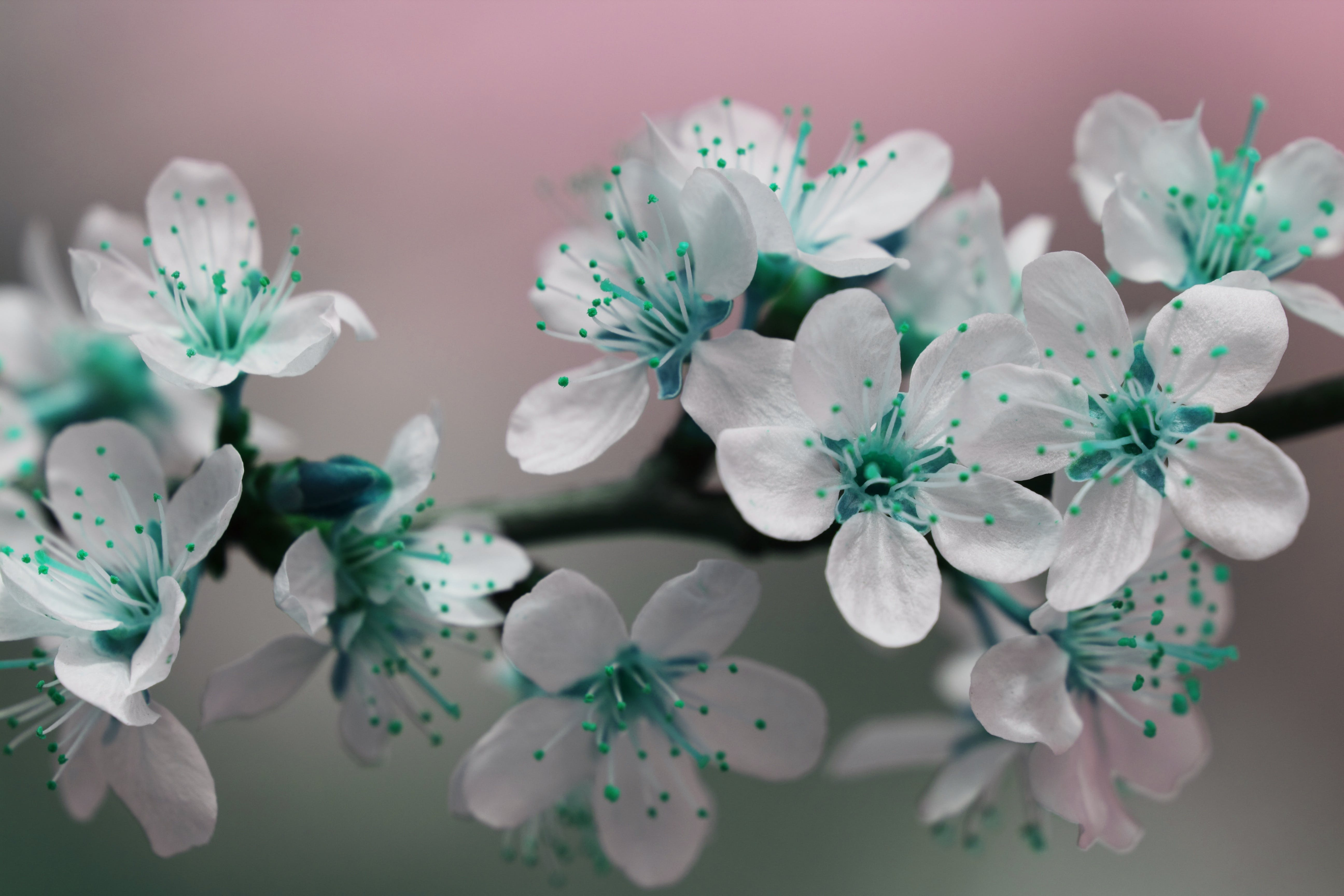 Free stock photo of nature, flowers, petals, blossoms