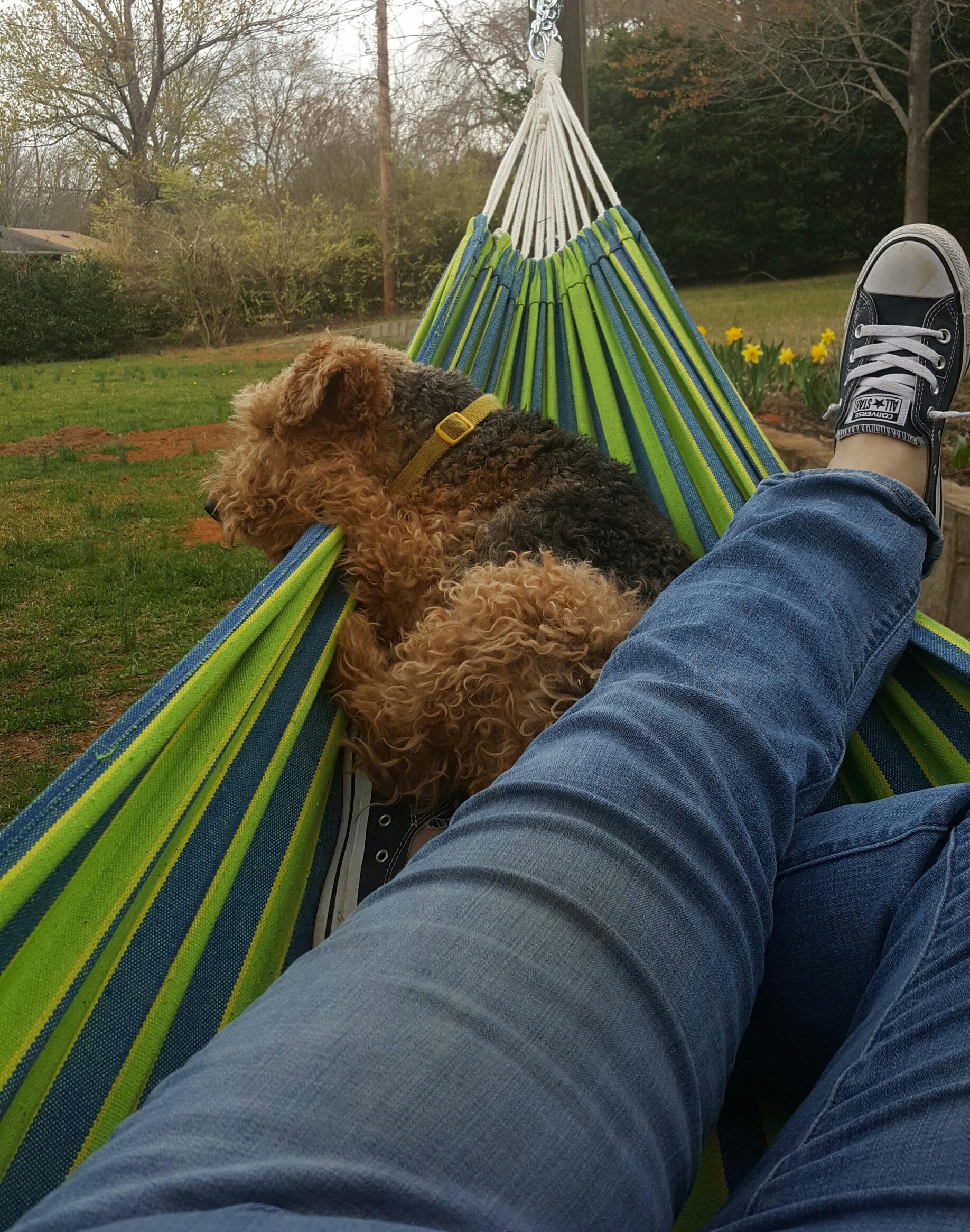 Free stock photo of Dog Day, lazy day