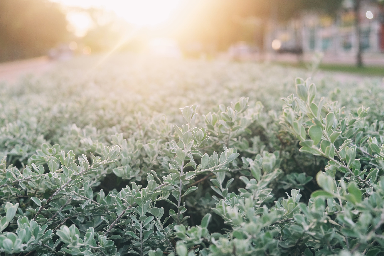 grelles sonnenlicht, natur, pflanze