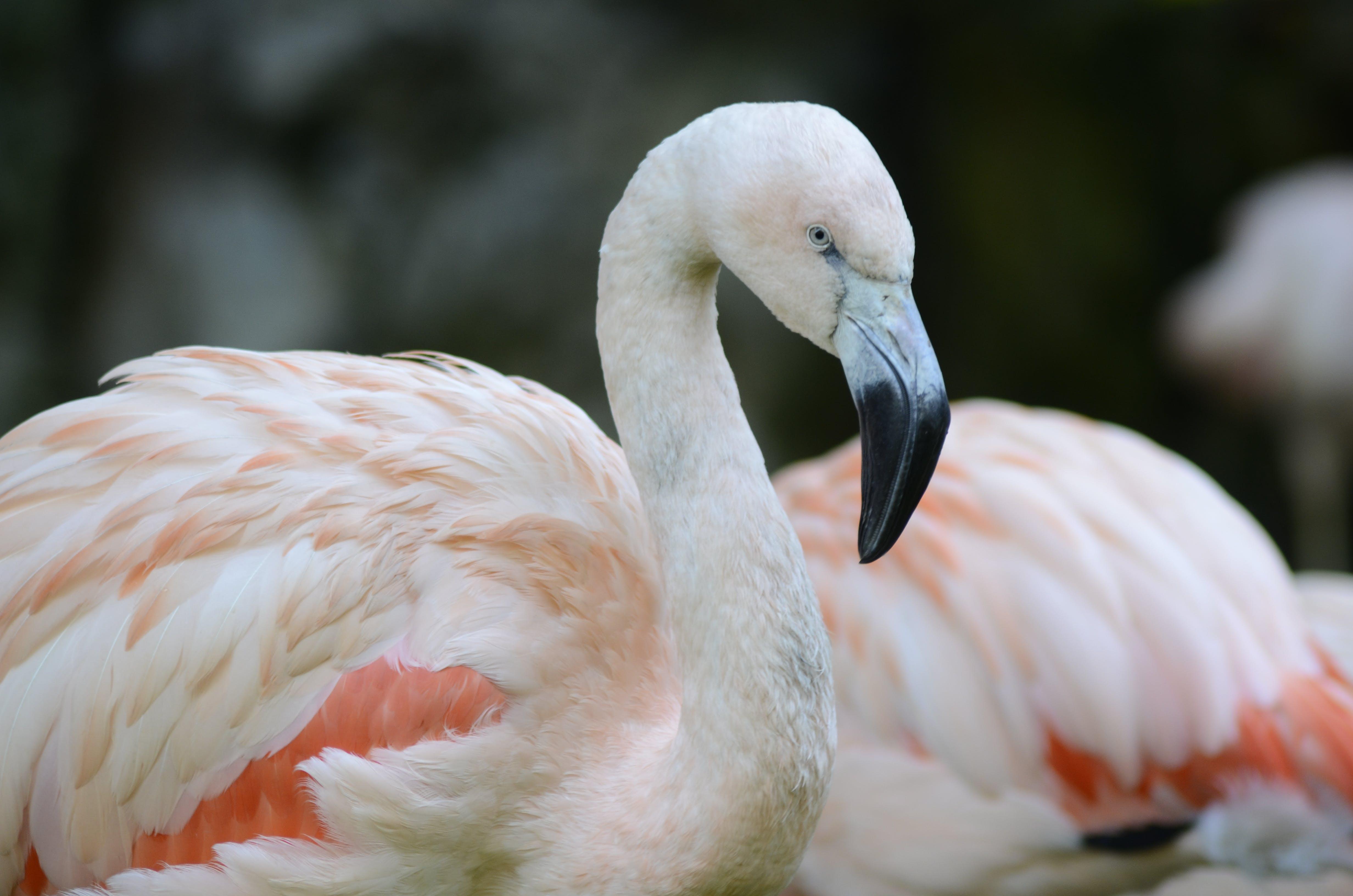 Closeup Photo of White and Orange Bird