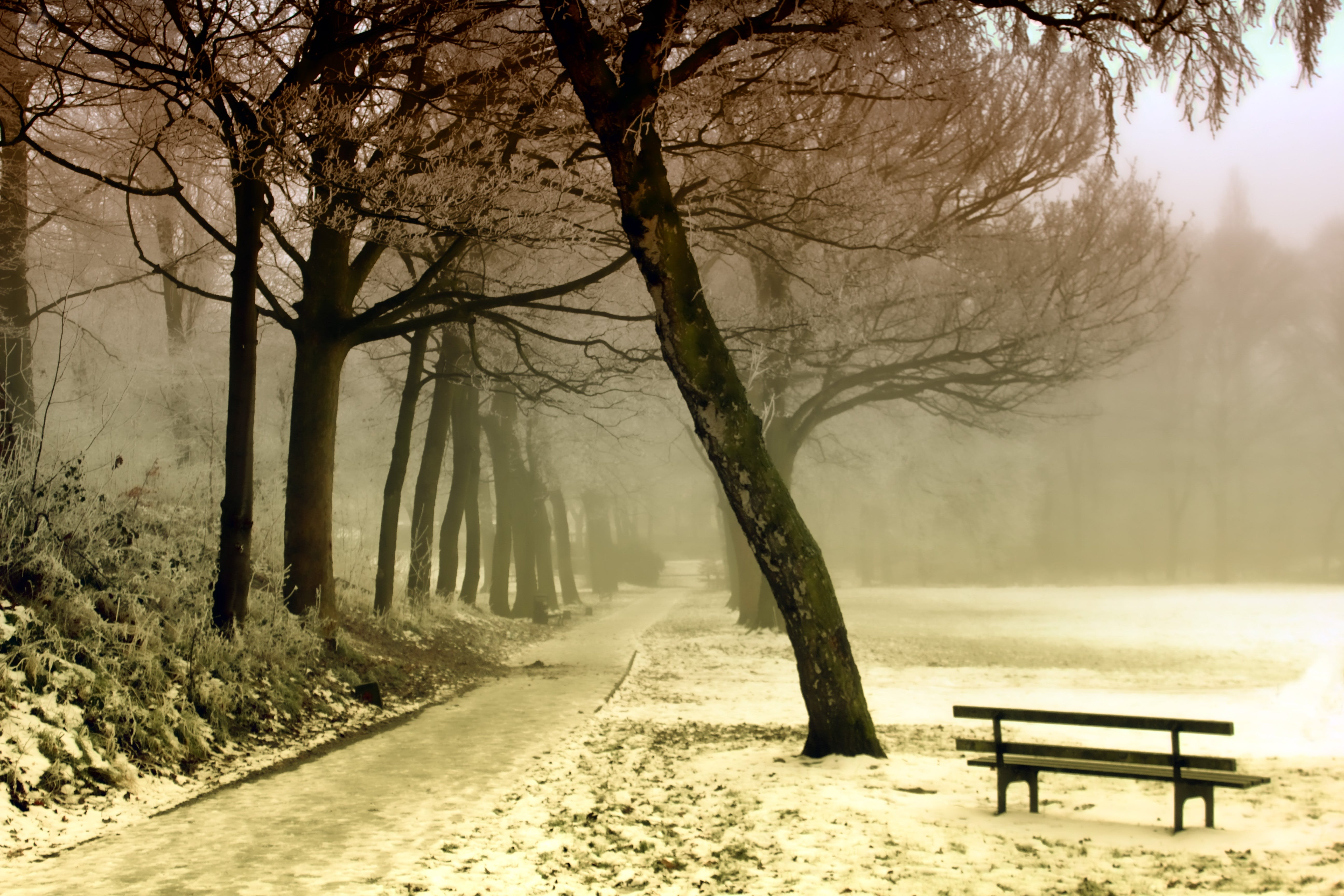 Road Beside Tree and Black Wooden Bench