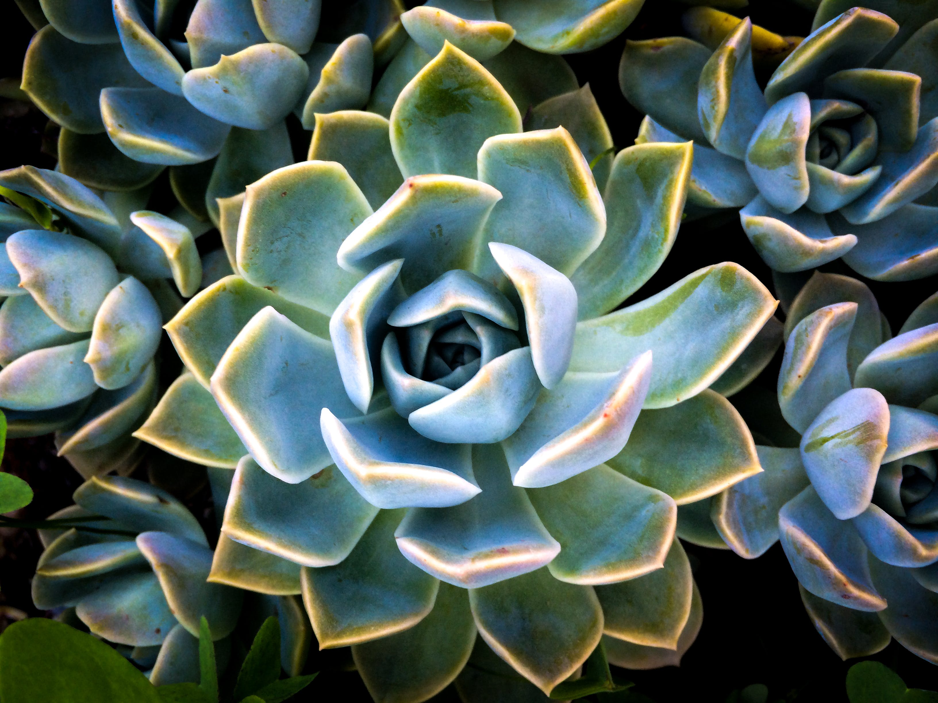 Closeup Photo of Succulent Flowers