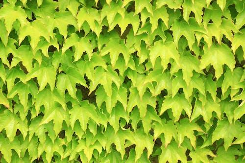 Free stock photo of close up, column, green