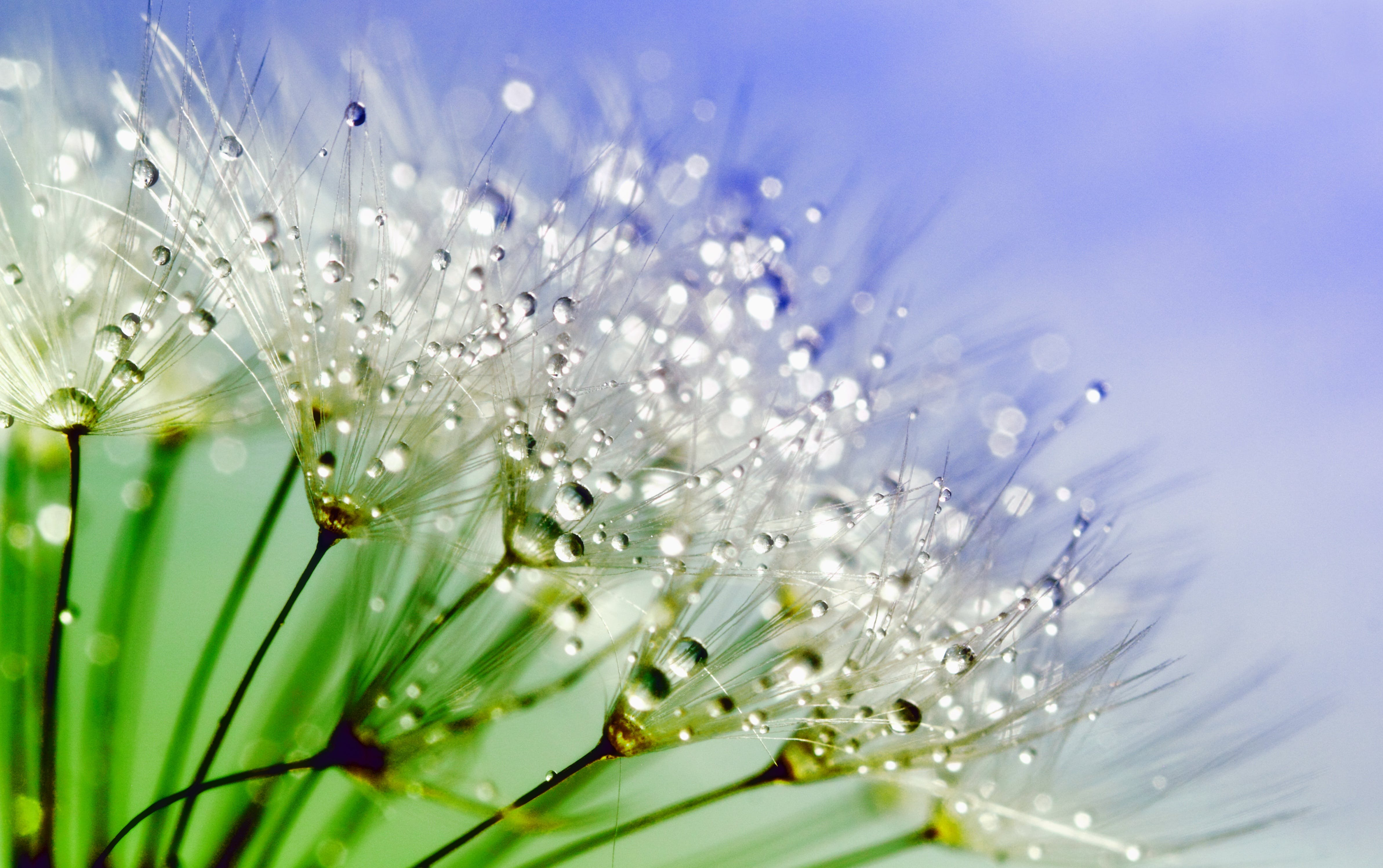 White Flowers With Water Droplets in Macro Shot