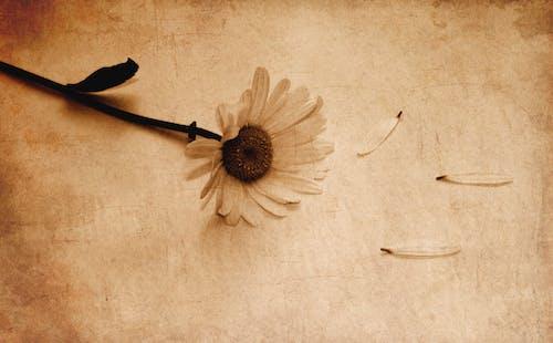 Ảnh lưu trữ miễn phí về cận cảnh, cánh hoa, Độc thân, gỗ