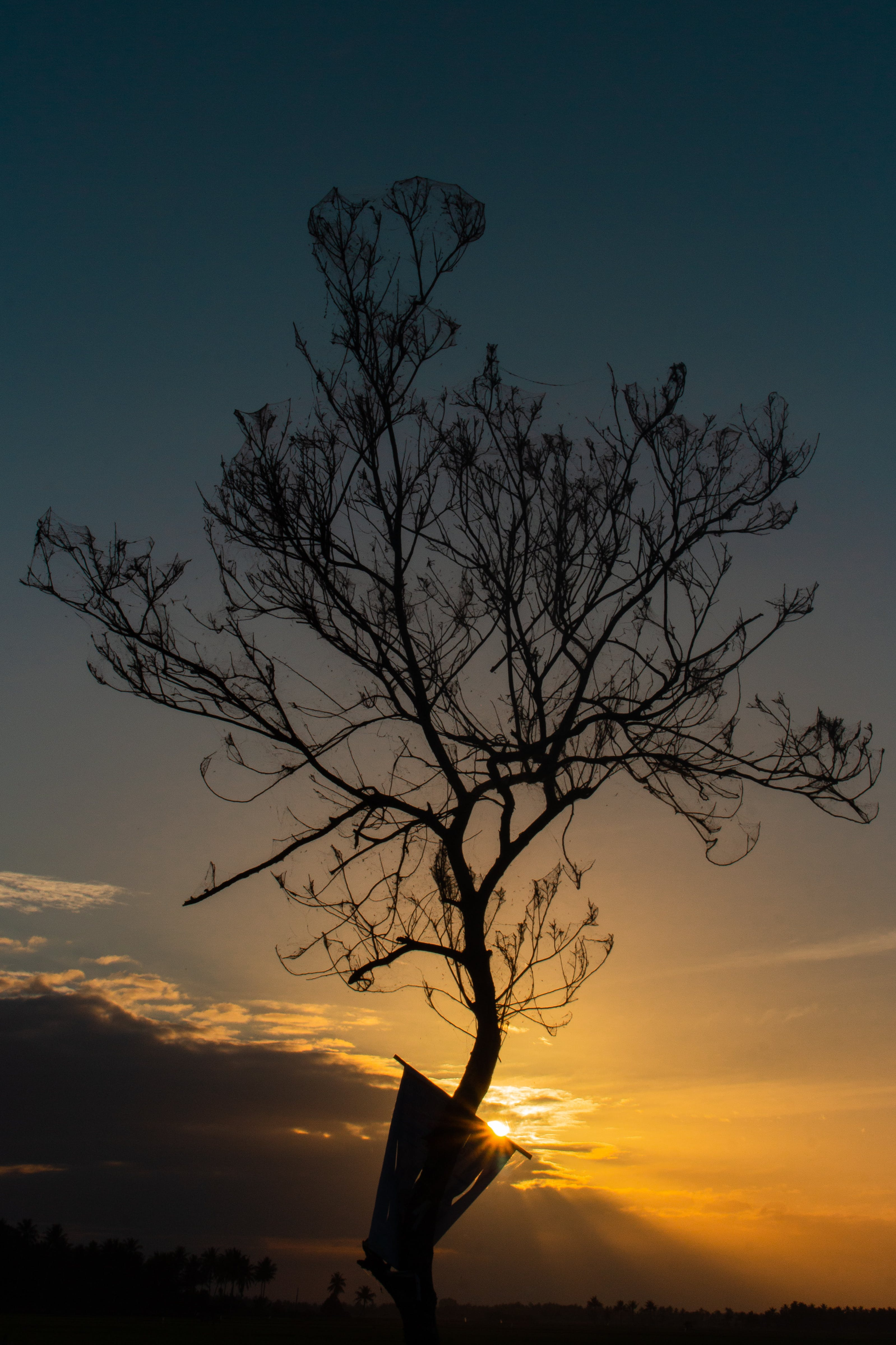 Free stock photo of landscape, sunrise, silhouette, tree
