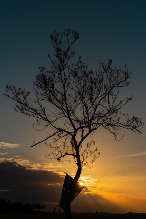 Základová fotografie zdarma na téma dobrodružství, krajina, strom, svítání