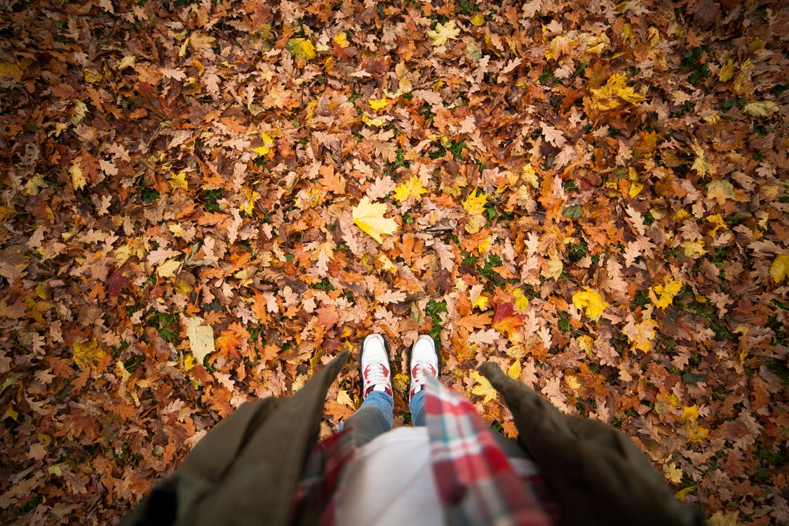 Person Standing on a Ground With Dry Leaves