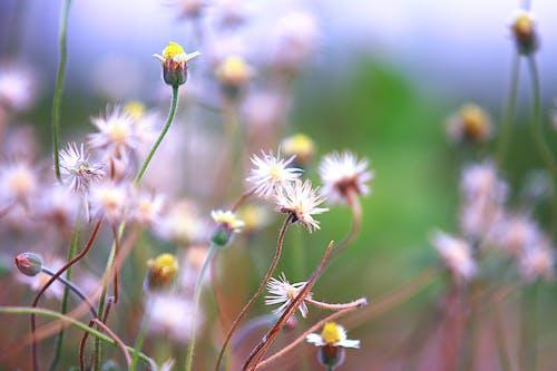 Kostenloses Stock Foto zu blumen, blüte, blütenblätter, farbe