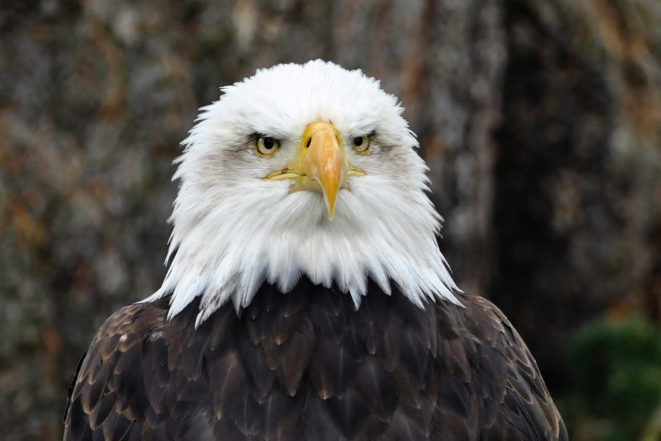 New free stock photo of bird, animal, eyes