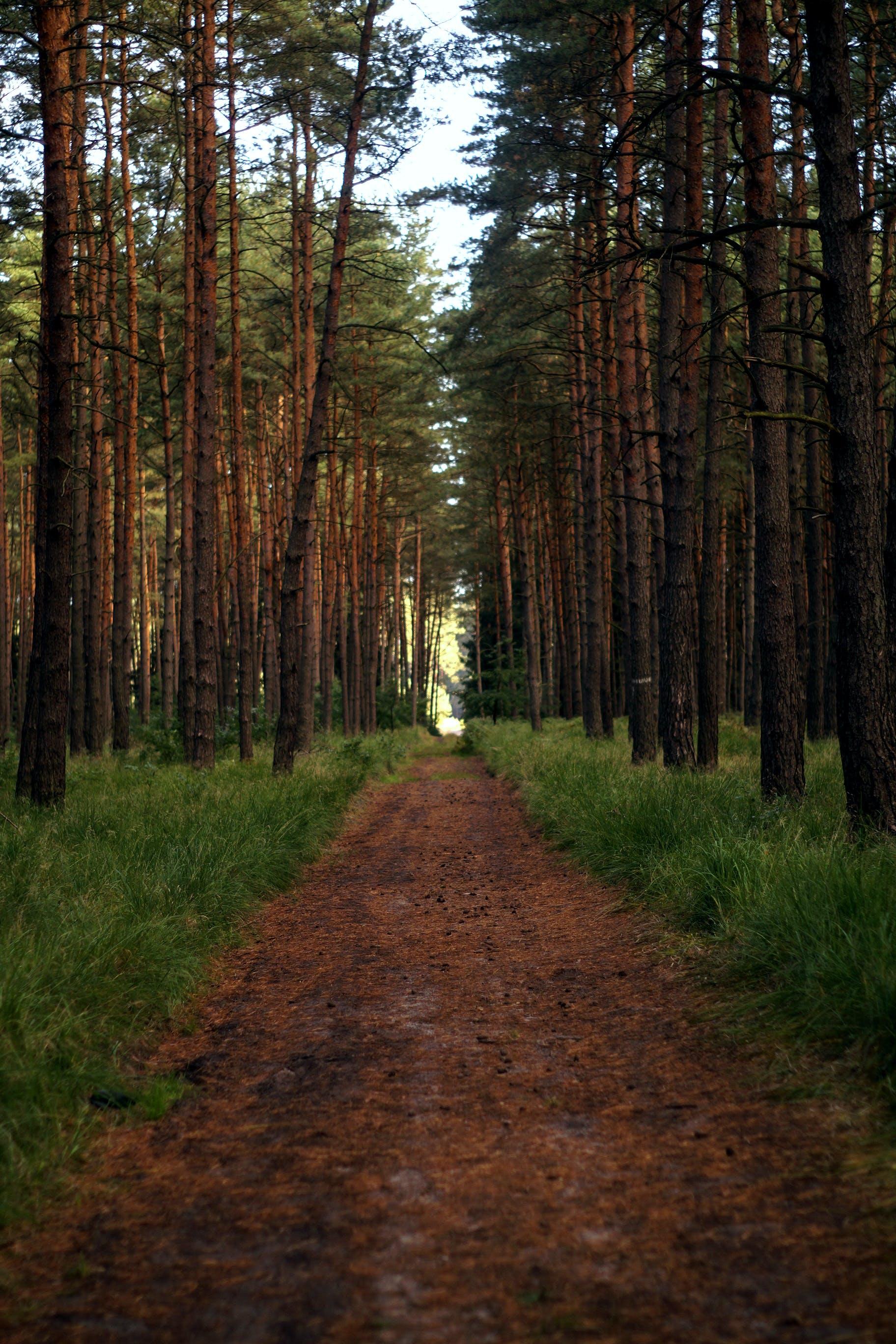 Kostenloses Stock Foto zu bäume, gras, holz, kiefer