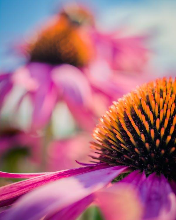 Macro Photography of Petaled Flowers
