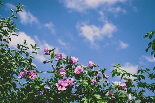 分公司, 增長, 夏天, 天空 的 免費圖庫相片