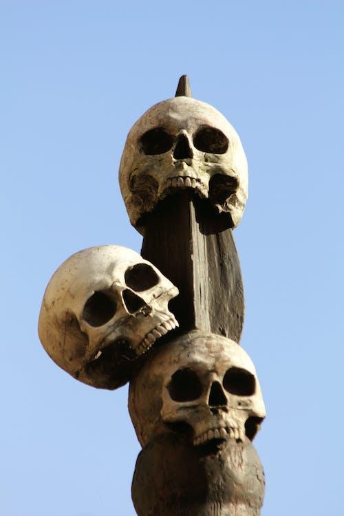 Free stock photo of bones, dead, death, horror