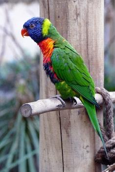 Free stock photo of wood, bird, animal, colourful