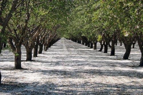 Δωρεάν στοκ φωτογραφιών με δέντρα, σειρά δέντρων