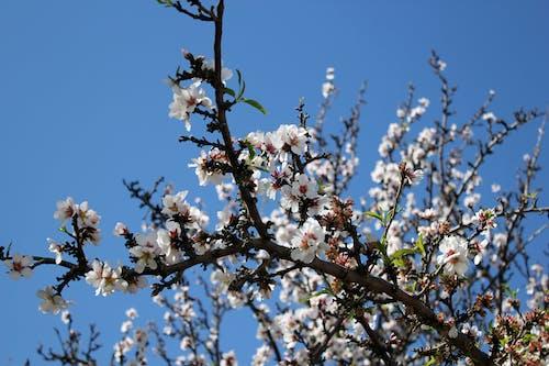 Δωρεάν στοκ φωτογραφιών με κλαδί δέντρου, λουλούδια