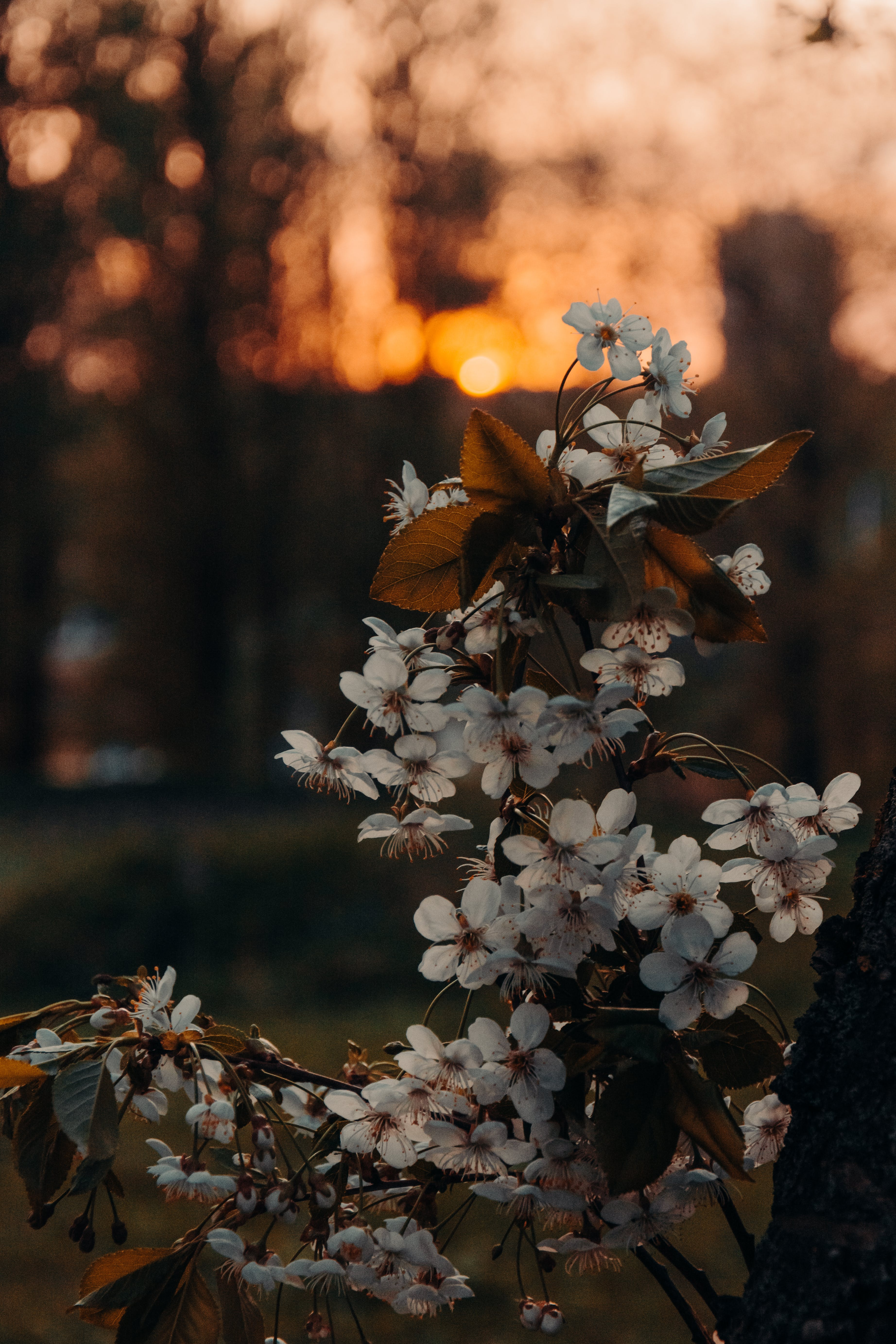 Foto profissional grátis de árvores, filiais, flora, floração