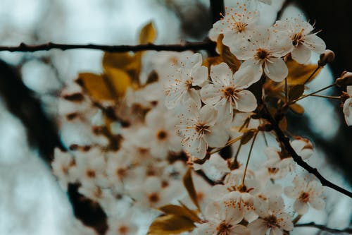 Ilmainen kuvapankkikuva tunnisteilla HD-taustakuva, kasvikunta, kasvu, kaunis
