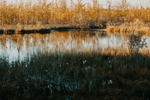 Imagine de stoc gratuită din apă, arbori, atmosferă sumbră, centrale