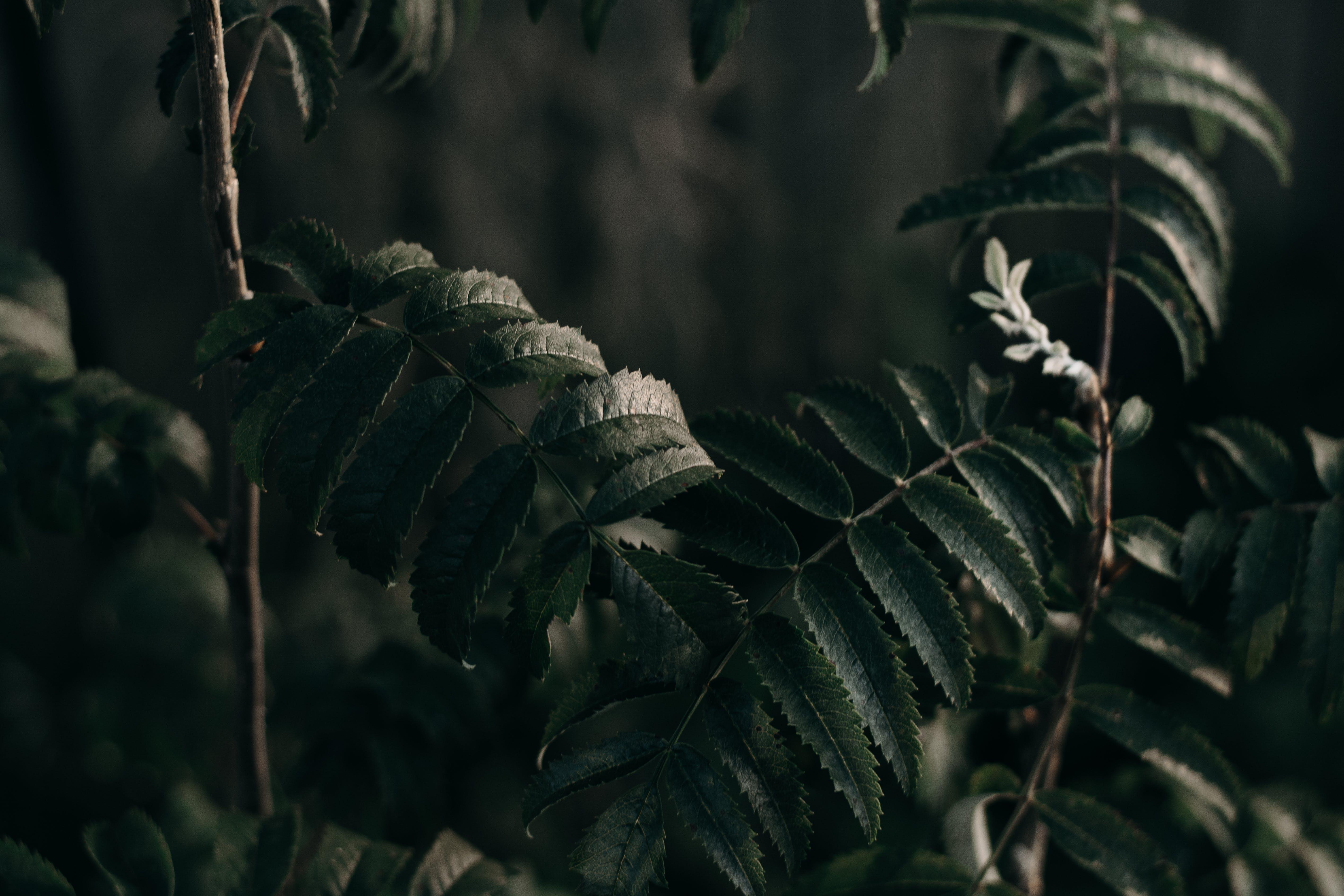 Kostenloses Stock Foto zu dunkel, muster, garten, gras