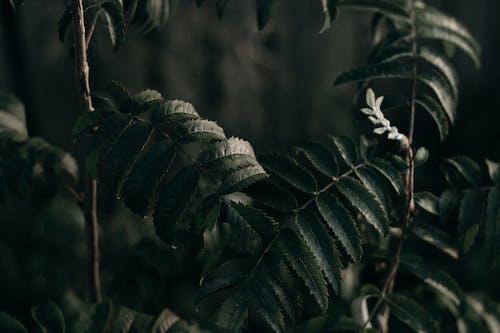 Immagine gratuita di ambiente, bellissimo, buio, colore