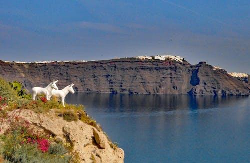 Imagine de stoc gratuită din Santorini