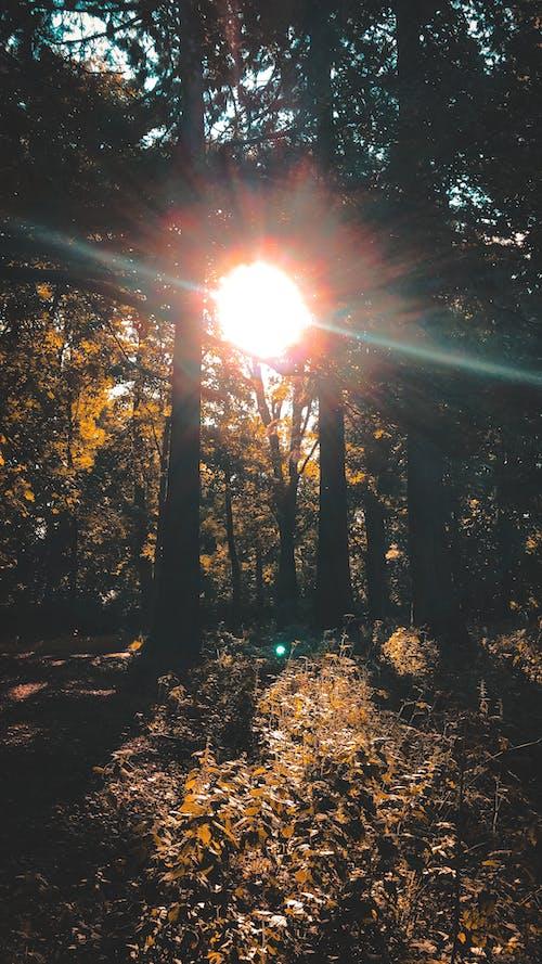 Gratis lagerfoto af skov