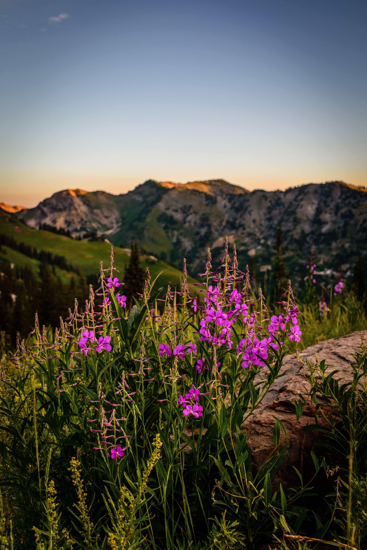 Foto d'estoc gratuïta de alba, bonic, bosc nacional, brillant
