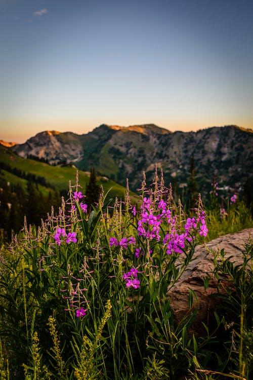 Бесплатное стоковое фото с HD-обои, гора, закат, красивые цветы