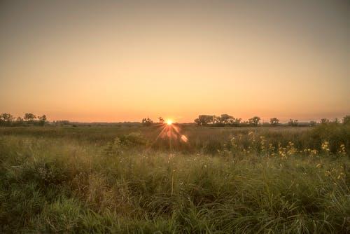 Photos gratuites de ange, coucher de soleil, fleurs, herbe