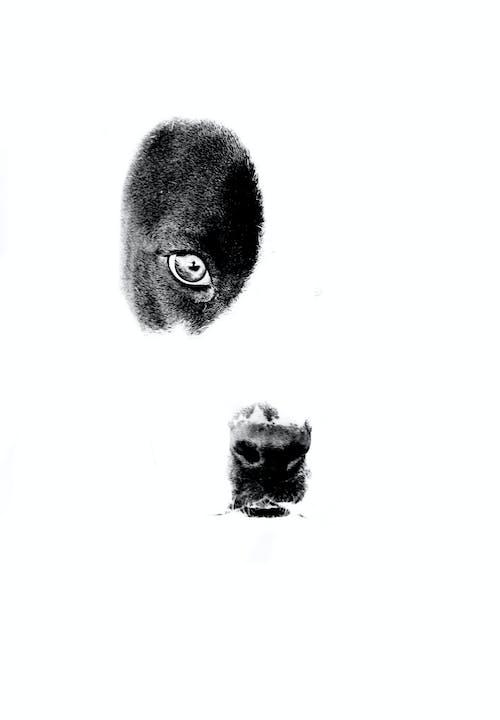 Ingyenes stockfotó fekete-fehér, házi kedvenc, kutya, kutyák témában
