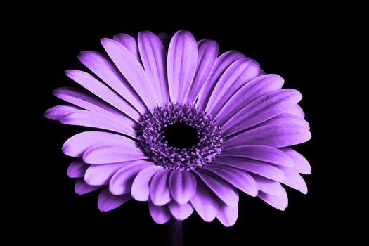 Purple flowers pexels free stock photos purple flowers mightylinksfo