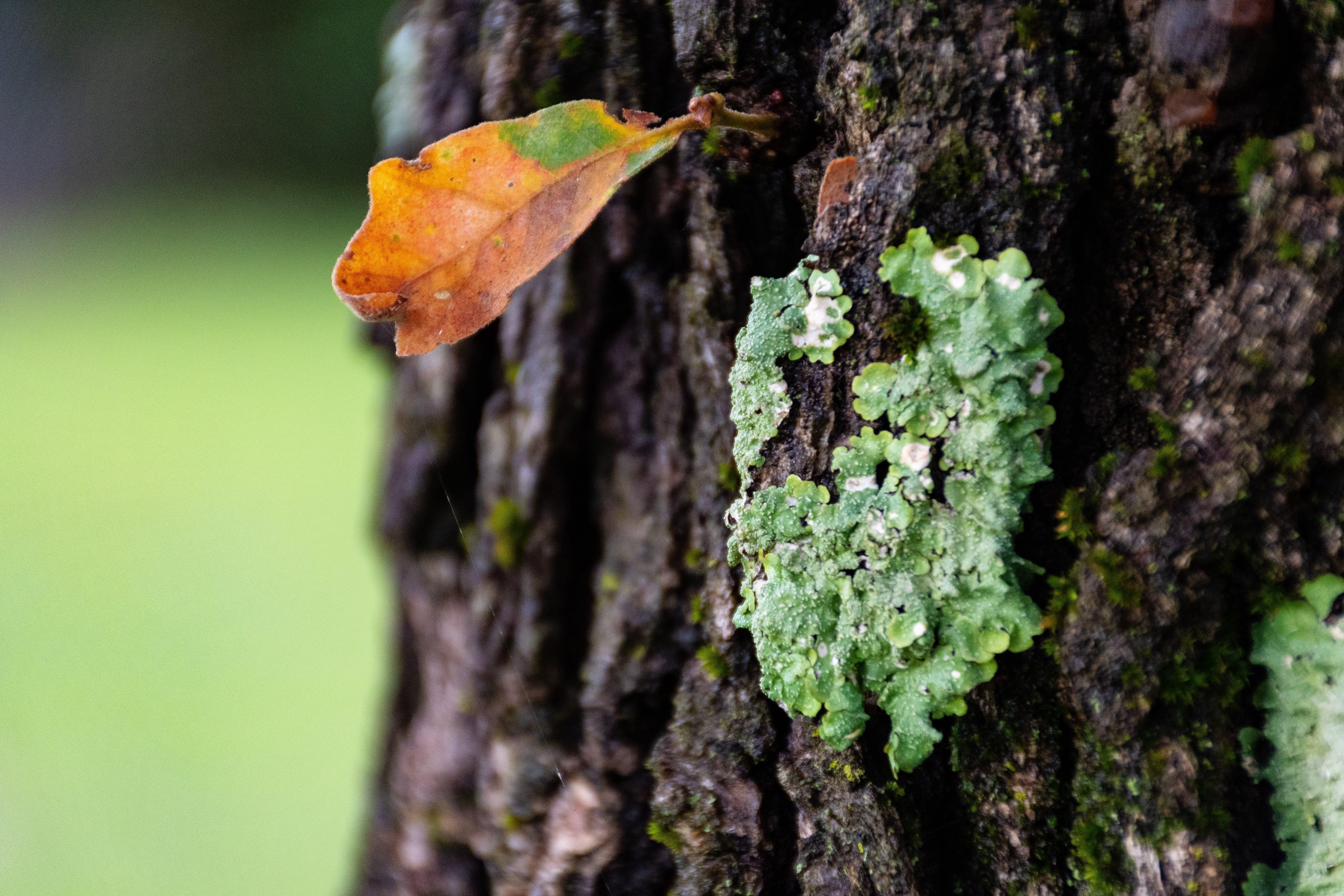 Free stock photo of leaf