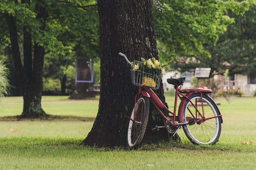 Ingyenes stockfotó bicikli, fák, fű, kerekek témában